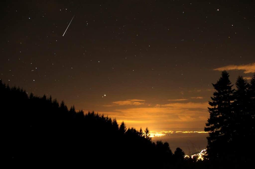 woodland and night sky