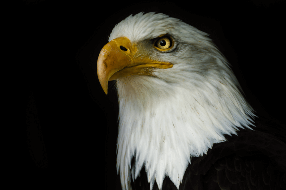the eagle in 8th house astrology